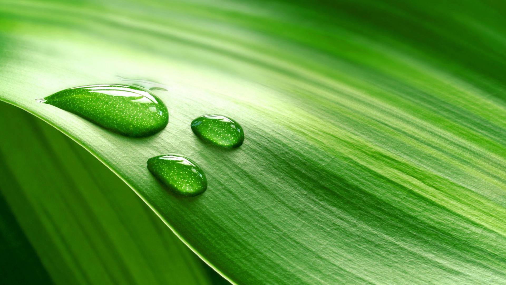 piante_garden1