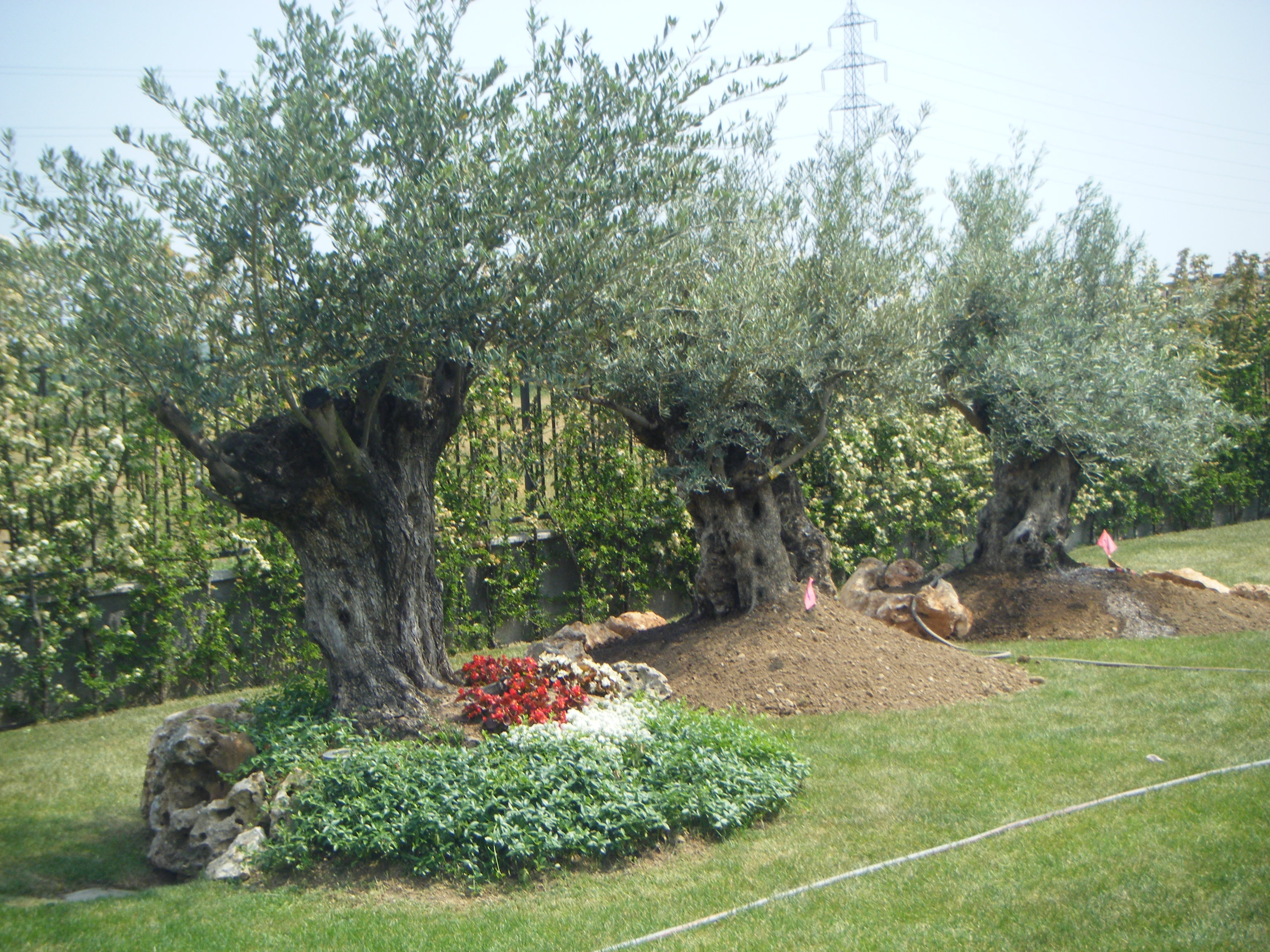 Vendita alberi da giardino - Prezzi alberi da giardino ...