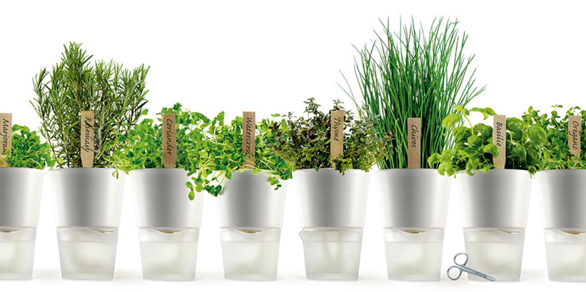 Piante da orto e aromatiche