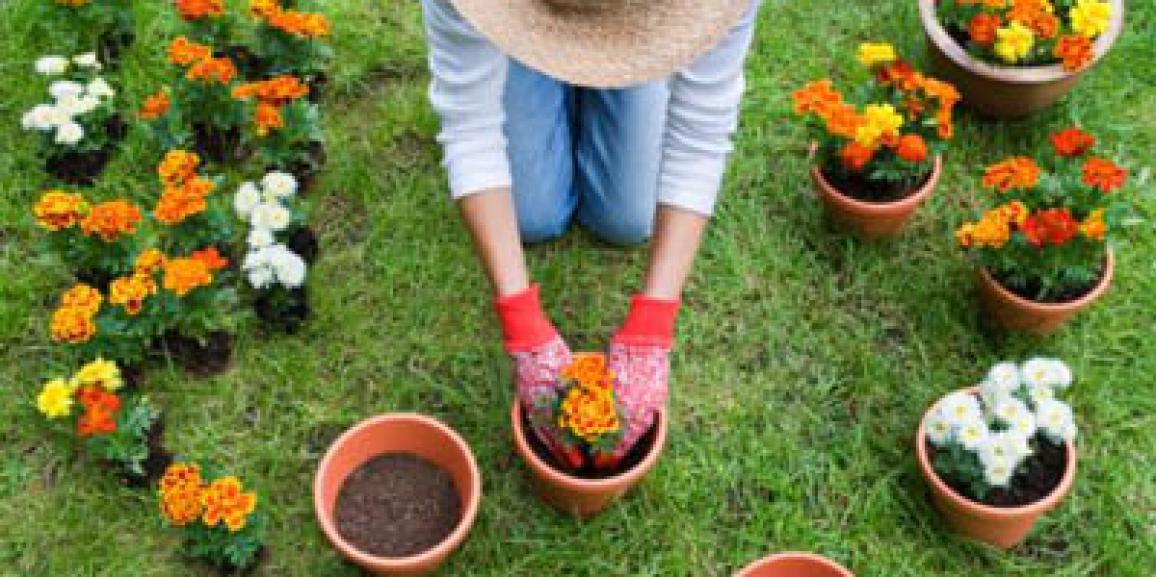 Prime fornitura piante primaverili
